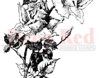 Deep Red Rubber Stamp Roses Pen and Ink Flower Blooms