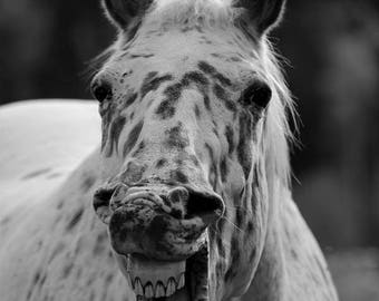 Animal Photograph, Funny animal Art, Horse Photo Print, Humorous Horse picture, Nursery fine Art photography, Black and White Art, Humor