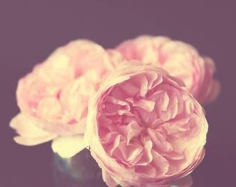Flower Rose Hydrangea Pink Photography, stilllife photo print, nature photography, david austin, wall art, pastel colour, pretty photo