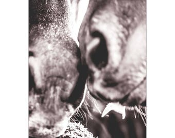 Contemporary Wall Art 'Horse Kiss' by Meirav Levy - Wildlife Decor Modern Horses Artwork on Metal or Plexiglass