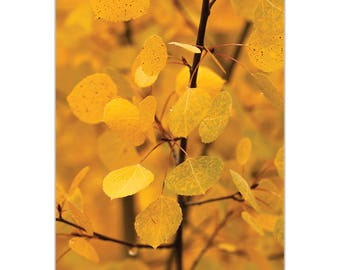 Nature Photography 'Turn to Gold' by Meirav Levy - Autumn Leaves Art Contemporary Trees Decor on Metal or Plexiglass