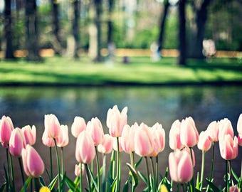 SALE Flower photography, large wall art, large art, pink wall art, pink art, canvas art, canvas wall art, nature photography,Keukenhof,tulip