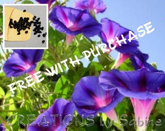 FREE WITH PURCHASE - 100 Purple Morning Glory Seeds Annuals Flowers Vines Climbers Heart Shaped Leaves Backyard Gardening Gardener 2017/2018