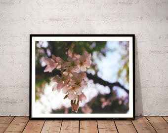 "cherry blossom photography / spring blooming tree raindrop flower floral art print /  pink pastel large wall art / ""cherry blossom bokeh"""