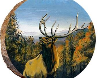 Elk Enjoying the  View - DAE382