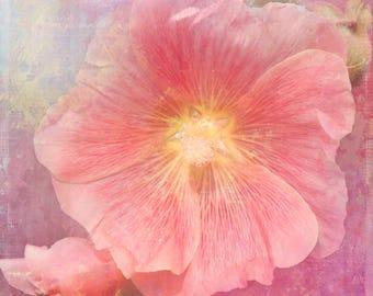Hollyhock, Flower Photography, Floral Photography, Garden Photography, Fine Art Photography, Botanical