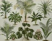 1894 Antique print of HOUSEPLANTS. HOUSEPLANT. Garden Plants. Ornamental plants. Flowering Plants. 123 years old gorgeous lithograph.
