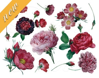ROSES of Redoute wedding clipart Instant download, digital images, pink red white cabbage rose flower clipart