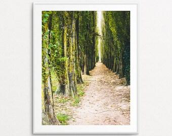 Nature Photography - France Photography, France Print, Ivy Path Photo, Autumn Photograph, Dreamy Photography, Home Decor, Nature Wall Art