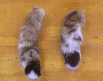 2 Bobcat Tails