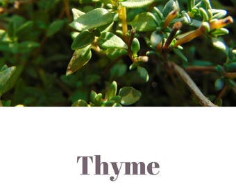 Thyme essential oil QRDS