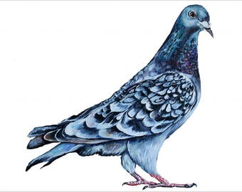 High Quality Print  - London Blue Town Pigeon Painting - Wall Art Decor - Nature British Birds - Natural History Illustration A3