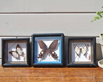 Framed Vintage Taxidermy Butterflies