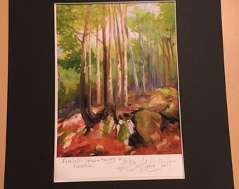 Ancient Trees and Rocks, Acadia. Limited Edition Print by Alexia Scott
