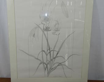 Large Winslow G Carnnell print lillies