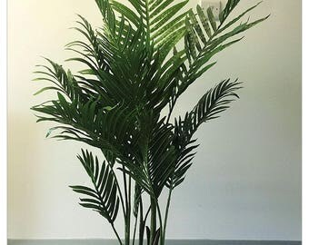 Areca Palm Plant Dypsis Lutescens Easy To Grow Free