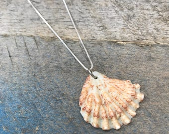 """Real Shell Necklace Kittens Paw Plicatulidae - sterling silver 18"""" - Atlantic Ocean - beach jewelry - gift for her"""