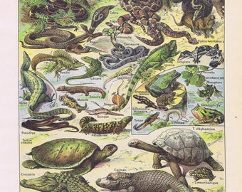 antique print reptiles crocodile turtle lizard frog 1922