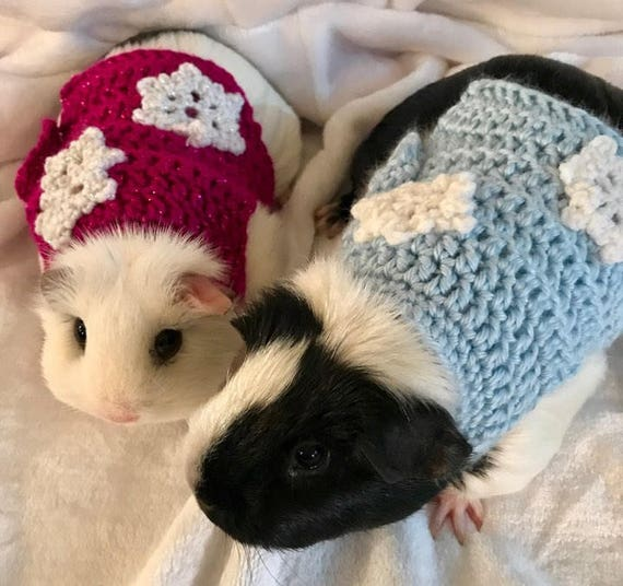 Guinea pig images black and white dress