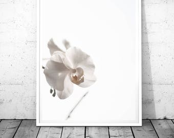 white orchid print, flower wall art, orchid wall decor, botanical poster, minimal decor, modern art, floral digital print, white photography