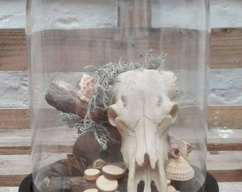 "Skull/decor in bell jar ""Texas"""