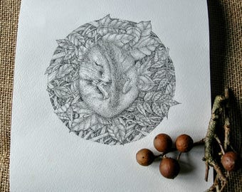 Original pen and ink drawing of a sleeping dormouse