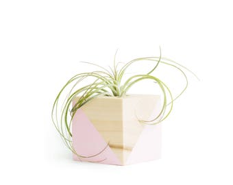 Pastel Pink Pot, FREE SHIPPING, Air Plant Holder, Cute Pots Pink, Shelf Decor, Gifts for Her, Air Plant with Holder, Small Wood Pot, Planter