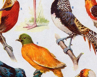 Set of Four Vintage Bird Charts #4