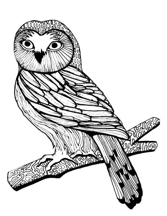 coloring page woodland owl birds of prey owl