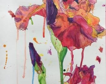Original india ink and pen iris flowers