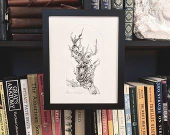 Bristlecone Pine, Tree art print, tree etching, old tree art, tree illustration, bristlecone tree, old tree art, drypoint etching, original