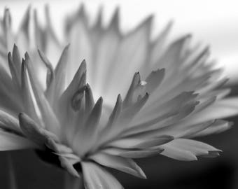 Black and white fine art photograph flower