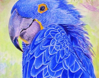 Limited Edition Fine Art Giclée Print (on 310gms Fabriano): Hyacinth Macaw #01/50 by Martin Romanovsky