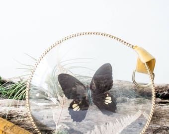 Glass encased butterfly and plant