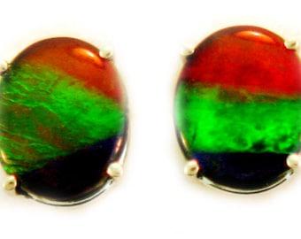 Pair of Oval Shape Canadian Ammolite Stud Earrings on 14k White Gold
