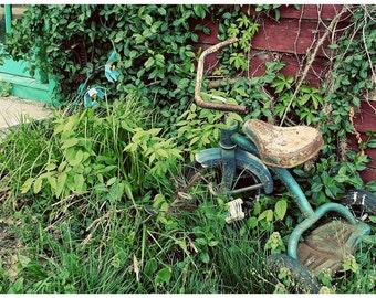 Overgrown Garden Photo — Rusty Blue Tricycle Nestled Into Green Garden — Wild Porch Garden Photograph — Springy Gardening Art — Americana