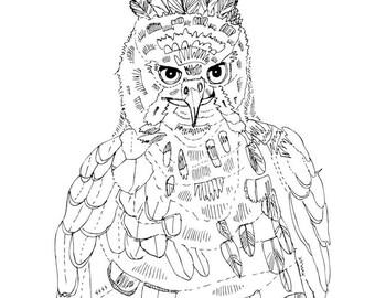 gallant hawk-eagle illustration art print