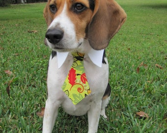 Fall Leaves Bow Tie, Necktie, or Bow on a Shirt Style Collar for both Dogs & Cats