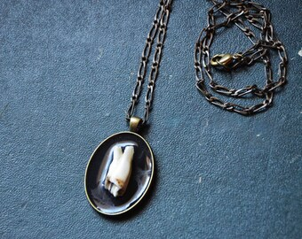 Osteology, molar tooth, Oddities necklace necklace