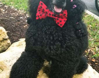 Matching Red Paw Print Collars and Bow Ties