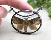 moth necklace, night butterfly, real insect, terrarium necklace, handmade