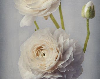 Ivory Ranunculus Print, Flower Photography, Cottage Chic Wall Art,  Still Life Photography, Gift for Her, Bedroom Decor, Beige, Gray