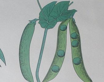 Rossignol school poster: fruit / seed