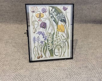Genuine vintage framed botanical drawing, flower illustrations, botanical print, floral, in glass frame, Green leaves Purple yellow tulip