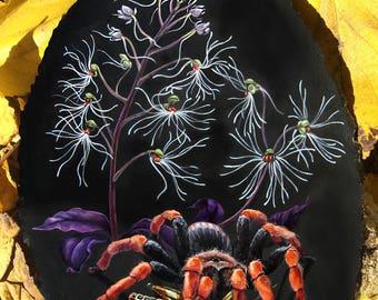 Tarantula with Medusa Orchids