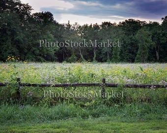 Wildflower field, Flower field backdrop, Photography backdrop, digital backdrop, Photoshop Background, Floral landscape, Split Rail fence