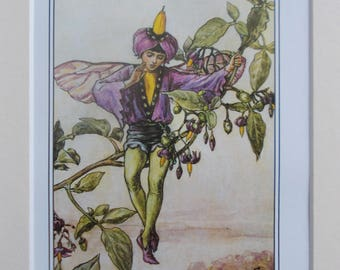 NIGHTSHADE Flower Fairy, Cecily Mary Barker in 10in x 8in Ivory Mount VINTAGE 8in  x 6in  Print