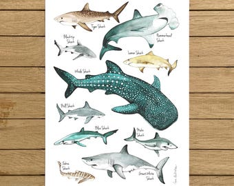 Sharks Poster, Giclée Print, Watercolour illustration, A3 or A4 size