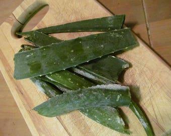 """Pure Aloe Vera Gel from Raw Aloe Vera Leaf- One Large 12"""" cutting, Fresh Cut Whole Leaf"""