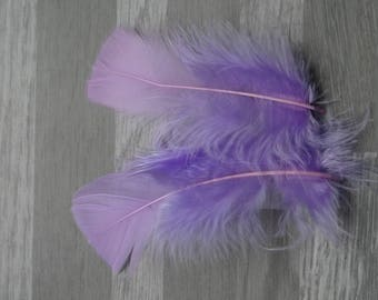 Set of 20 lilac Turkey feathers